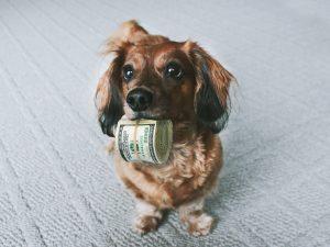 finance a puppy