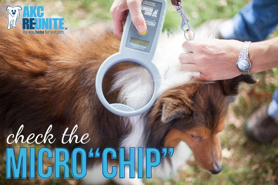 AKC Reunite - Check the Microchip